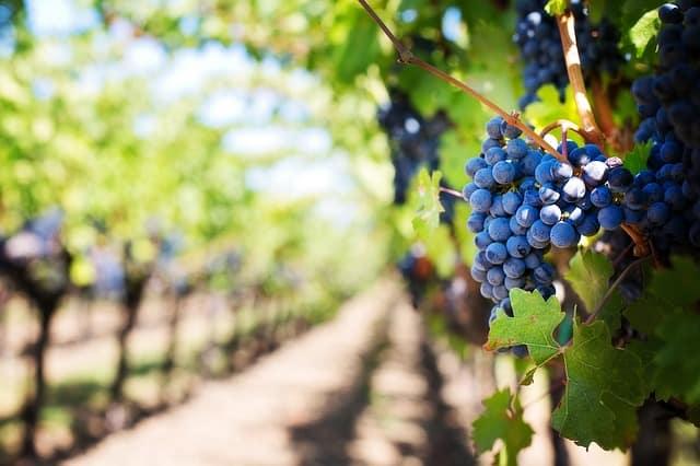 How to Taste Wine Like a Pro 1